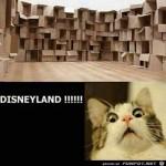 Disneyland-für-eine-Katze.jpg auf www.funpot.net