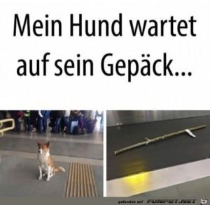 Hund-wartet-auf-sein-Gepäck.jpg auf www.funpot.net