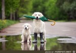 Hunde-mit-Schirm.jpg auf www.funpot.net