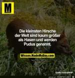 die-kleinsten-Hirsche-der-Welt.jpg auf www.funpot.net