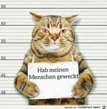 Katze-ist-schuldig.jpg auf www.funpot.net