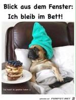 Ich-bleib-im-Bett.jpg auf www.funpot.net