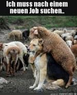 Neuer-Job-nötig.jpg auf www.funpot.net