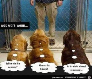 Hunde-suchen-sich-das-Herrchen-raus.jpg auf www.funpot.net