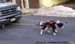 lustiges-bild-der-abschlepphund.jpg auf www.funpot.net