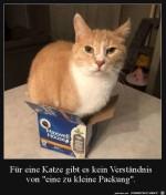Katze-mit-Karton.jpg auf www.funpot.net