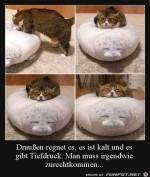Katze-macht-es-sich-gemütlich.jpg auf www.funpot.net