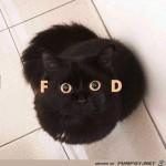 ich-will-Futter.jpg auf www.funpot.net
