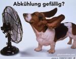 Hund-vor-dem-Ventilator.jpg auf www.funpot.net