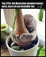 Ich-bin-ein-Koalabär.jpg auf www.funpot.net