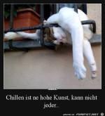 Katze-chillt.jpg auf www.funpot.net