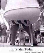 Dieser-Hund-lebt-gefährlich.jpg auf www.funpot.net
