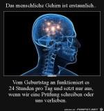 Das-menschliche-Gehirn.jpg auf www.funpot.net