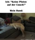 Intelligenter-Hund.jpg auf www.funpot.net