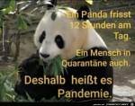 Der-Panda.jpg auf www.funpot.net