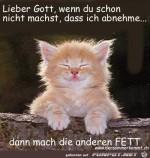 lieber-gott--wenn-du-schon-nicht-machst-das-ich-abnehme.jpg auf www.funpot.net