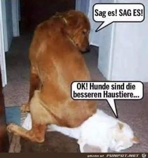 sag-es,..-sag-es..........jpg auf www.funpot.net