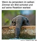 Witziger-Elefant.jpg auf www.funpot.net