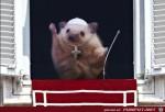 Lustiger-Hamster.jpg auf www.funpot.net