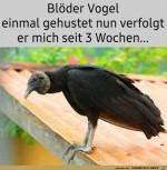 Dussliger-Vogel.jpg auf www.funpot.net