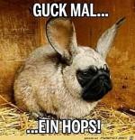 Ein-Hops.jpg auf www.funpot.net