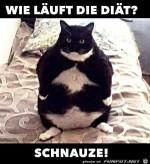 Wie-läuft-die-Diät?.jpg auf www.funpot.net