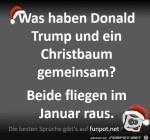 Trump-und-Christbäume.jpg auf www.funpot.net