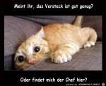 Katze-hat-tolles-Versteck.jpg auf www.funpot.net