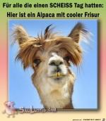 Coole-Frisur.jpg auf www.funpot.net