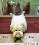 Piep-Show.......jpg auf www.funpot.net