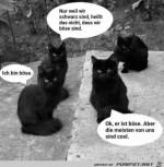 Schwarze-Katzen.jpg auf www.funpot.net