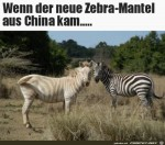 Zebra-aus-China.jpg auf www.funpot.net