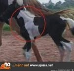 Siehst-du-das-Pferd-auf-dem-Pferd?.jpg auf www.funpot.net
