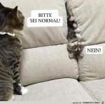 Kleine-Katze---bitte-sei-normal.jpg auf www.funpot.net