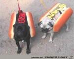 Hotdogs.jpg auf www.funpot.net