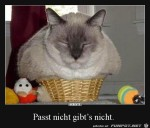 Passt-nicht-gibts-nicht.jpg auf www.funpot.net