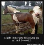 Es-gibt-immer-eine-blöde-Kuh.jpg auf www.funpot.net