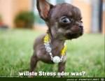 willst'e-Stress?.jpg auf www.funpot.net