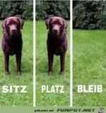 Sitz,-Platz,-Bleib.jpg auf www.funpot.net