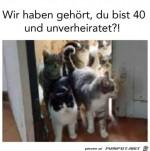 Katzen-Invasion.jpg auf www.funpot.net