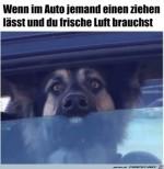 Hund-braucht-frische-Luft.jpg auf www.funpot.net