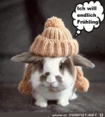 Ich-will-Frühling.jpg auf www.funpot.net