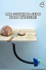 Mir-Schwoba-senn-hald-Käpsele.jpg auf www.funpot.net
