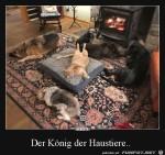 König-der-Haustiere.jpg auf www.funpot.net