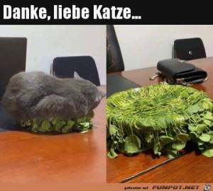 Ein-Dank-an-die-Katze.jpg auf www.funpot.net