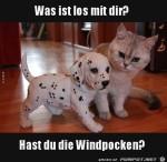 was-hast-du.jpg auf www.funpot.net