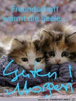 Guten-Morgen-Kätzchen.jpg auf www.funpot.net