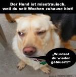Der-Hund-ist-misstrauisch.jpg auf www.funpot.net