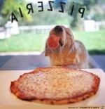 Er-liebt-Pizza.jpg auf www.funpot.net