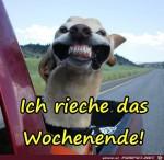 Rieche-das-Wochenende.jpg auf www.funpot.net